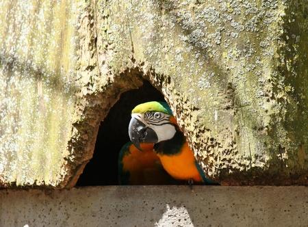 The Bird s Nest