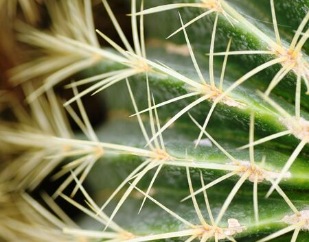 kerneudikotyledonen: spiny