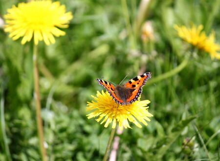 Butterfly on summer meadow photo
