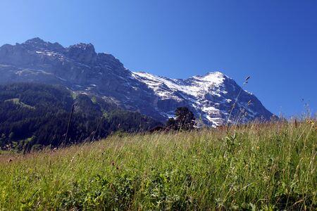 prato montagna: Prato di montagna di fronte al Eiger