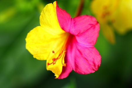 不思議の花