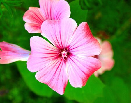 mauve: pink mauve