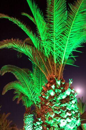 illuminated: Illuminated Palms Stock Photo