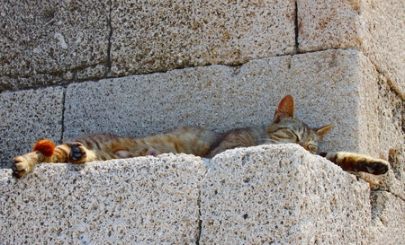 dozing: Dozing cat of Rhodes