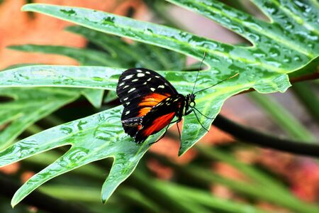 lepidoptera: Butterfly on leaf