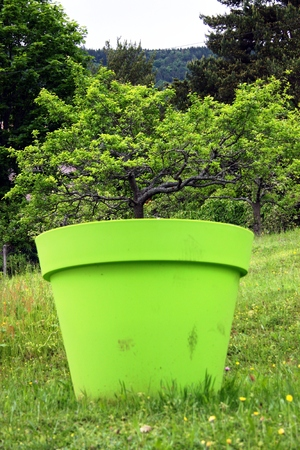 forced perspective: Apple tree in flowerpot Stock Photo