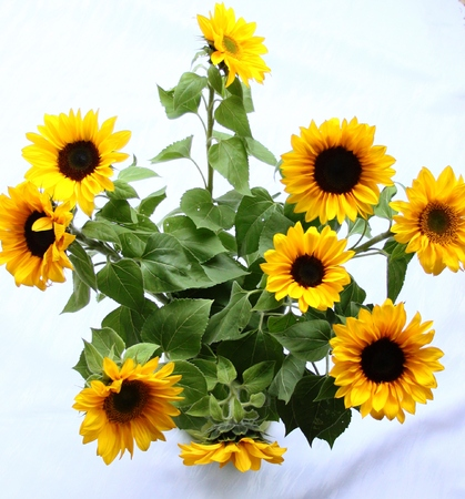 Lovely bouquet with sunflowers