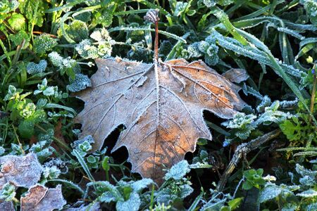 Leaf covered with hoarfrost