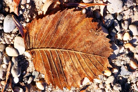 Brown leaf in autumn Stock Photo