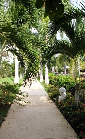 In the tropical garden Stock Photo