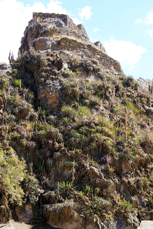 Rocks with bromeliad in South America