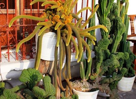 In the cactus garden