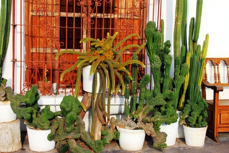 Cacti at the terrace Imagens