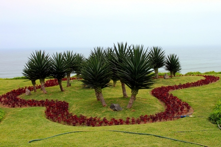 Dragon trees in the tropical garden