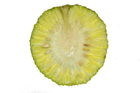 hedgeapple: Fruit of Maclura Pomifera cut in half and isolated on white