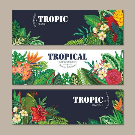colección de tres tarjetas, con loros, flores exóticas, plantas y hojas.