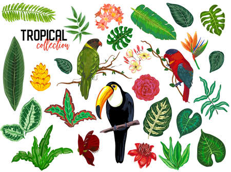 tropical collection with exotic flowers, leaves and birds. Ilustração