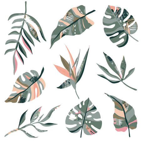 Vector collection of tropical plants and hand drawn abstract textures. Colorful nature set