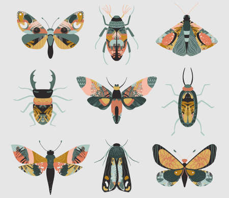 Set of colorful insects with hand drawn abstract texture. Beetle, butterfly, moth collection. 向量圖像