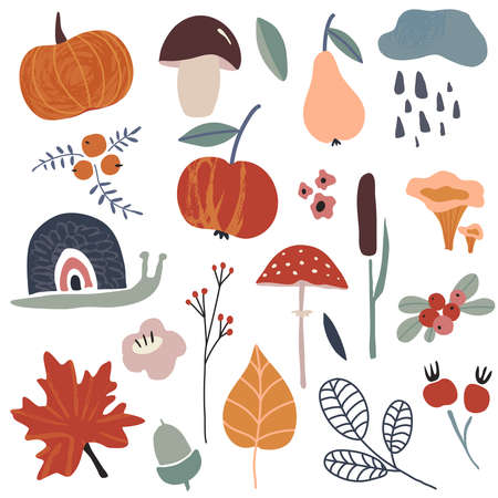 Autums vector collection of fall leaves, berries, plants, fruits, pumpkin, mushrooms