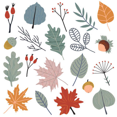 Autums vector collection of leaves, berries, plants and branches