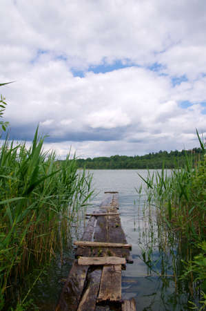 Forest lake in summer, green grass, freshwater