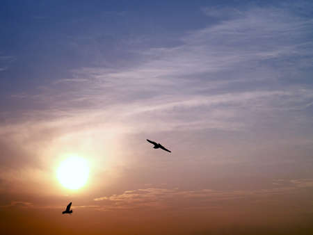 homing: sunset with silhouette of two birds flying homing