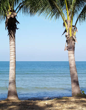 Two coconut trees on the beach, relaxation corner under the sylvan shadow of trees by the sea