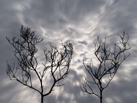 silhouette of two dead trees with motion dark storm clouds on scary sky background