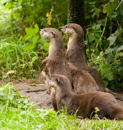 sentry: Sentry Otters