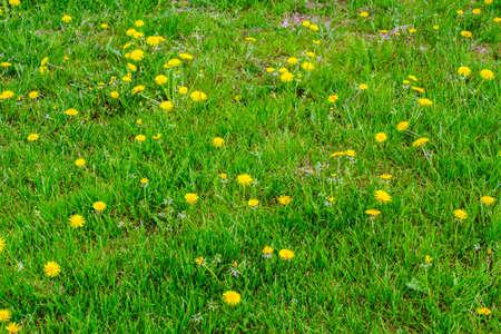 폴란드에서 봄에 잔디와 습지 marigolds와 초원. 스톡 콘텐츠