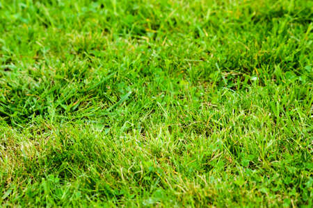 Green background - lawn with grass on spring. 스톡 콘텐츠