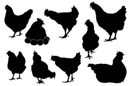 Hen chicken silhouette vector set for multipurpose use like back ground, wallpaper, pattern, sticker, peeler and more