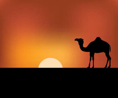camel in the sunset desert landscape vector background illustration theme