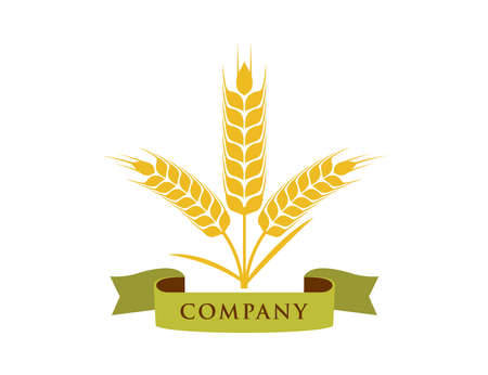 wheat nettle grain with ribbon banner vector logo design template