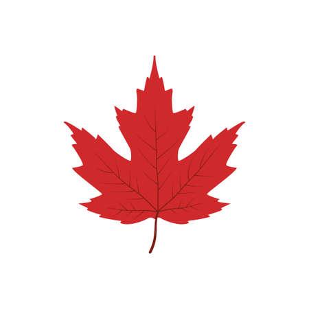 single red maple leaf vector illustration design template