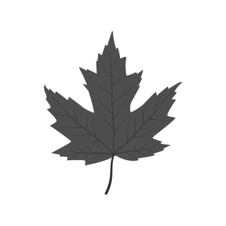 single grey maple leaf vector illustration design template