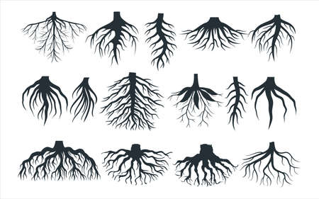 Assorted plant root type shape vector