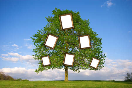 picture framing: Lonely tree with empty picture frames re: Family Tree
