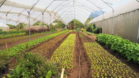 growing salad crops in poly tunnels in central america antigua guatemala