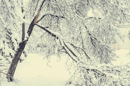 Winter view on fallen trees under snow. Dangerous trees under heavy snow. Snow storm on city street. Winter view on fallen trees after heavy snowing.