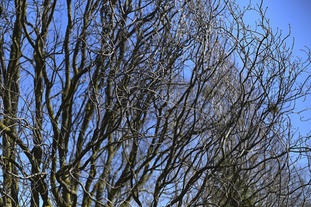 branches of a tree without foliage against a background of spring blue sky