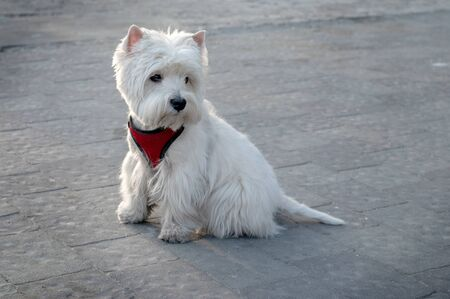 portrait of white dog on the street