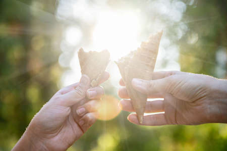 Two female hands holds a horn of ice cream on a background of rays of sun and blurred green trees. Concept summer fun