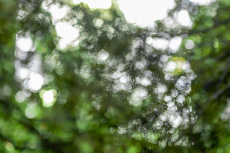 Green background of tree foliage. Fresh healthy green bio background with abstract blurred foliage