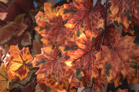 Artificial maple leaves as autumn background.