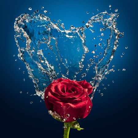 blue rose: splashes of water and rose on a blue background Stock Photo