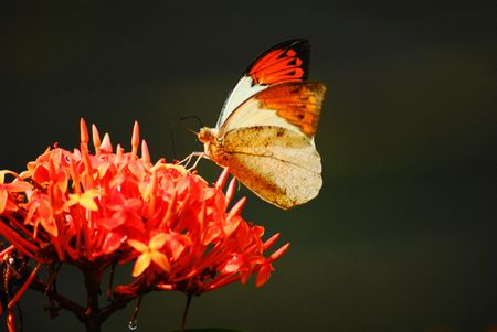 The Special Butterfly with Little Red Flowers