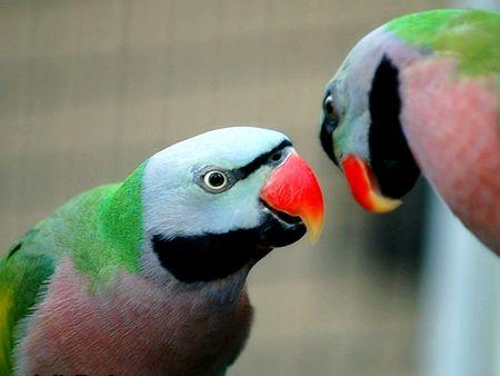 parot: The Parot Bird in Zoo