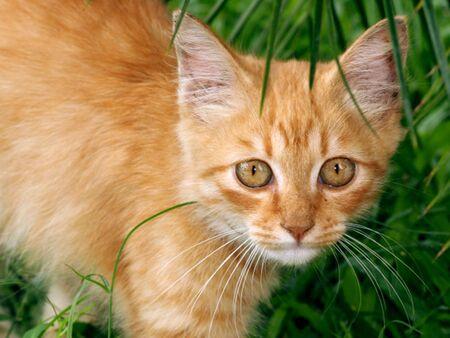 Home Yellow Cat Stock Photo - 5120684